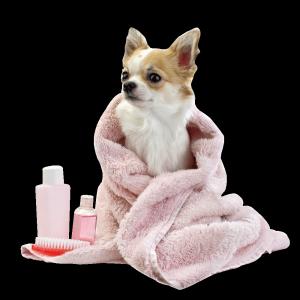 tapi-kutyakozmetika.hu