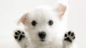 tapi-kutyakozmetika.hu.16feb