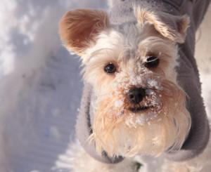 tapi-kutyakozmetika.hu.uj