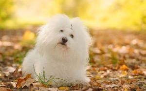 kutyakozmetikus tanfolyam