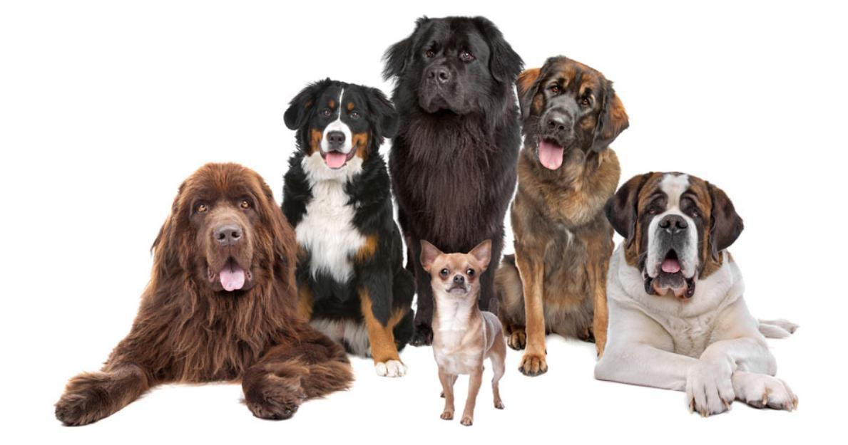 tapi-kutyakozmetika.hu.okt