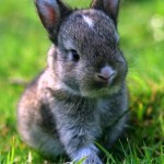 cute-animals-baby-bunny-rabbit-pics