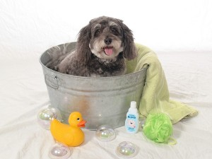Bathtime(Small)