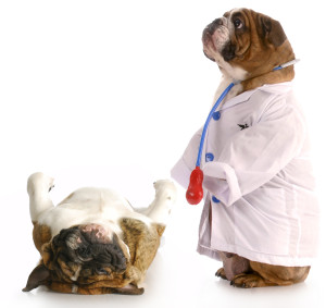 bigstock-Veterinary-Care-9086836