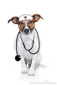 dog-as-doctor-23266823