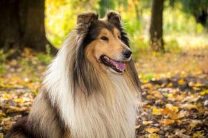 kutyák féregtelenítése