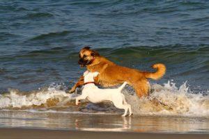 Kutyával a strandon